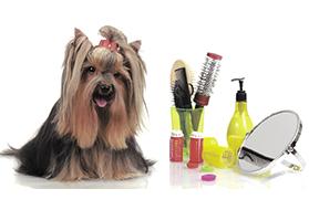 Zabrze Strzyżenie Psów Psi Fryzjer Salon Fryzjerski Dla Zwierząt